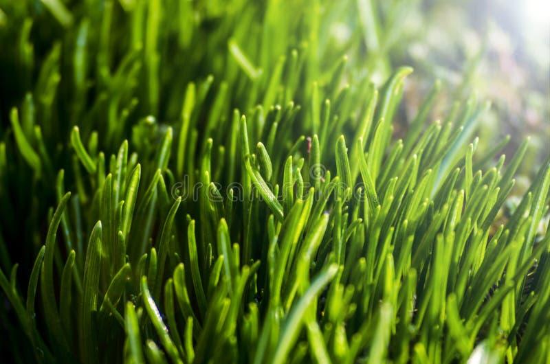Closeupnatursikt av unga gröna växter under morgonsolen royaltyfria foton