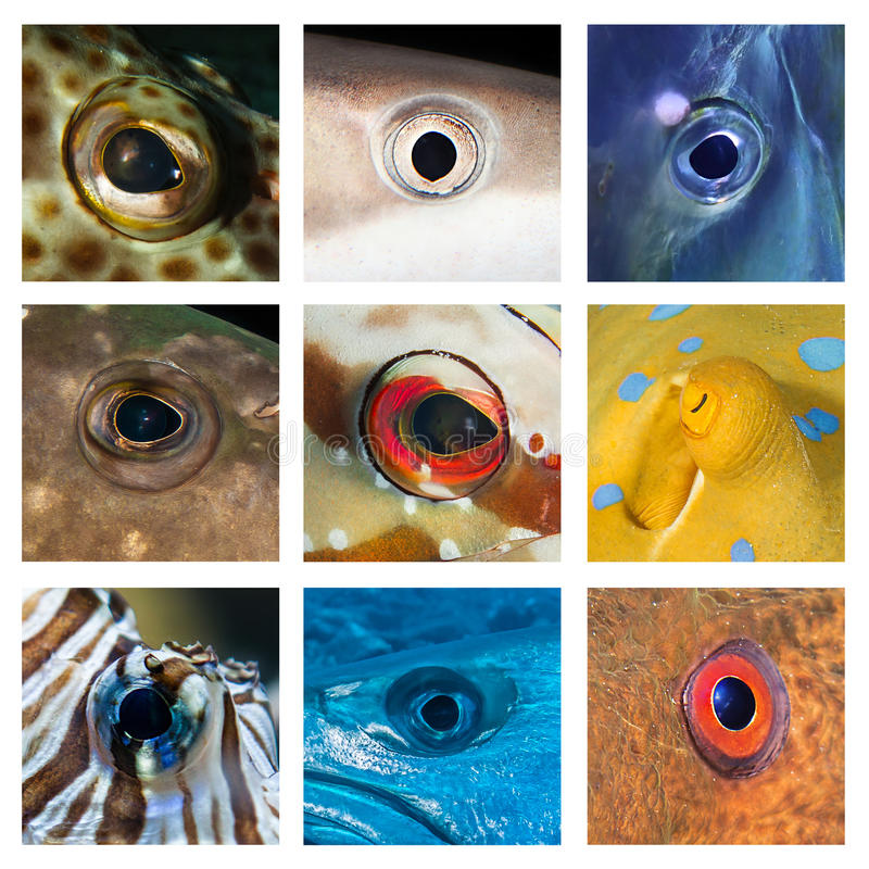 Closeups of different fish eyes. From the Red Sea and the Indian Ocean royalty free stock image