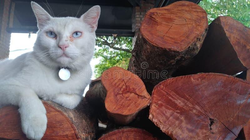 Closeupsikt av avsnittet för träd för slutsnittträ med sprickor och årliga cirklar med en katt på den arkivbild