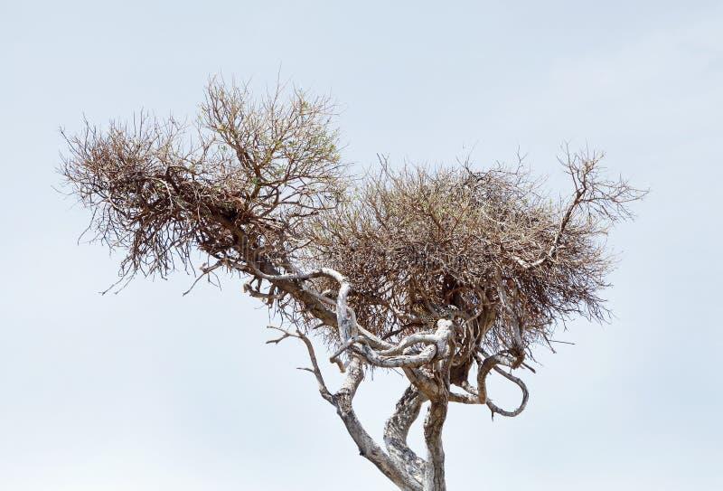 Closeupsikt av en gepard och ett rov på trädet arkivbilder