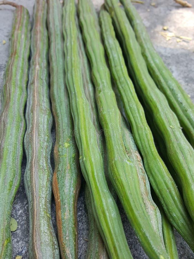 closeuptexturmoringa fröskidor frukten är rundan som är lång, gräsplan arkivfoton