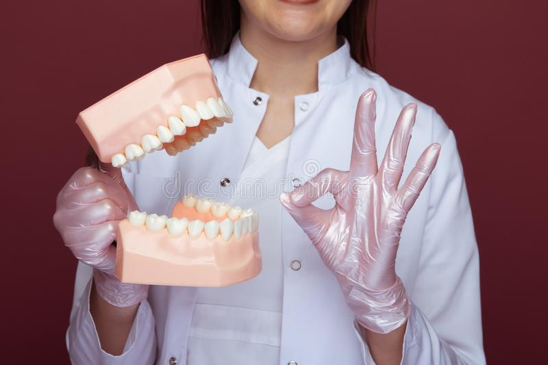 Closseup view doctor`s hands in gloves with jaw. stock photo