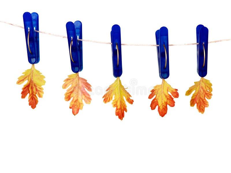 Clothespins con i fogli di autunno immagine stock libera da diritti