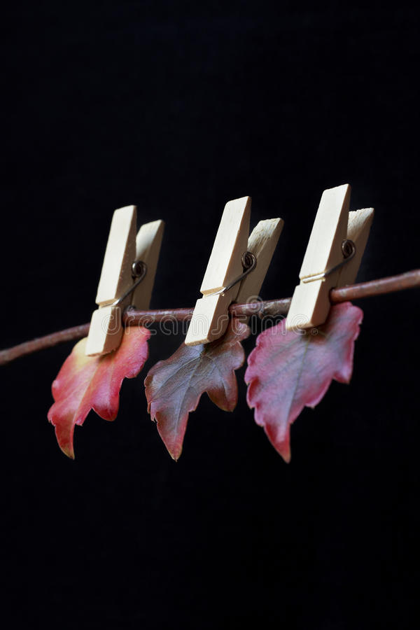 Clothespins with leaves stock photos