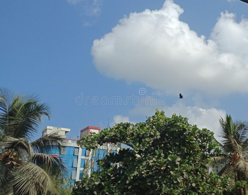 Cloud Cover in Summer and Bird Fly stock photos