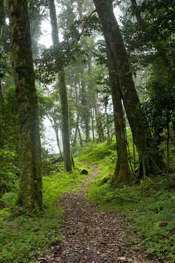 Cloud Forest royalty free stock photos