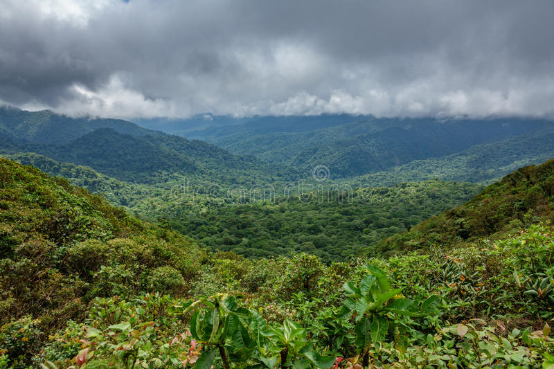 Cloud forest covering Bosque Nuboso Monteverde, Costa Rica royalty free stock images