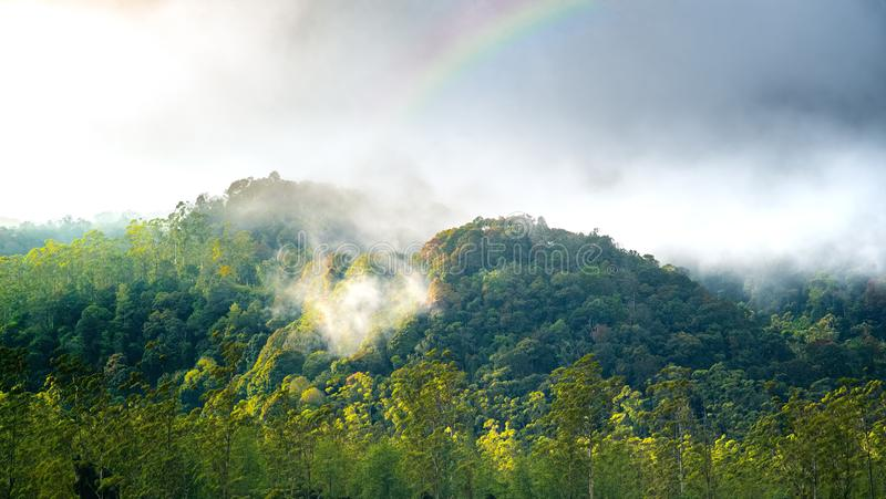 Silvagenitus Cloud Forest with Rainbow on The Top Of it. Mountain Hill Forest on Autumn. Cloud Forest with Rainbow on The Top Of it. Mountain Hill Forest on stock photography