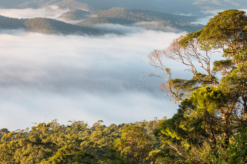 Cloud inversion above tropical rainforest in Tamborine National Park. Queensland, Australia royalty free stock photos