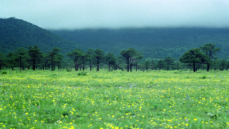 Download Cloud Mountain Tree And Grass Stock Photo - Image: 3903130