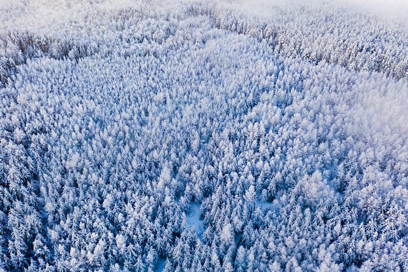 Cloud patches flow above winter forest, beautiful landscape. Coniferous woods in snow, aerial view. Cloud patches flow above a winter forest, beautiful landscape royalty free stock photos