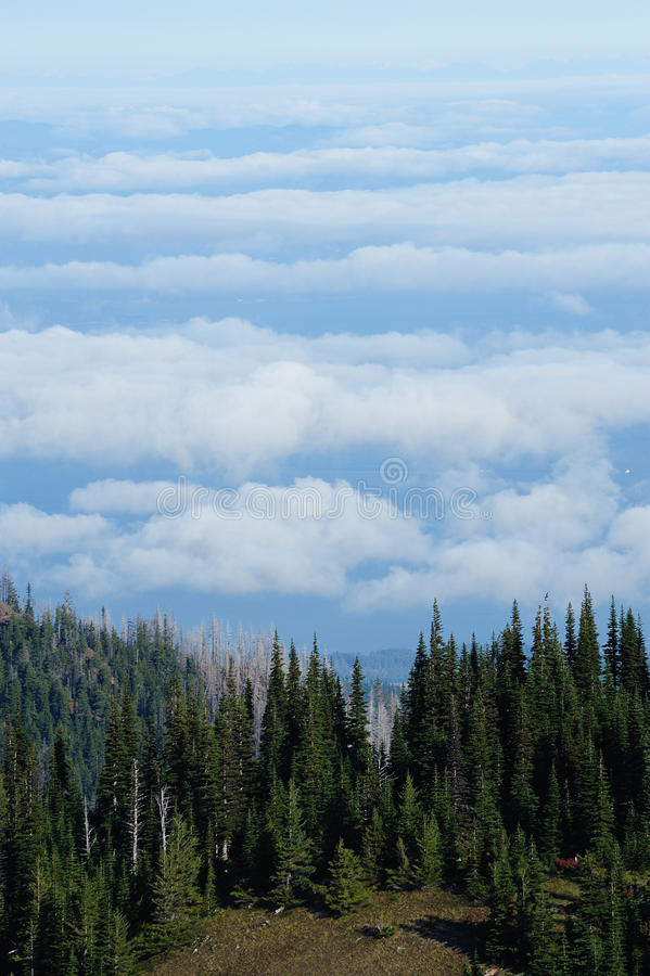 Cloud sea over mountain top stock image
