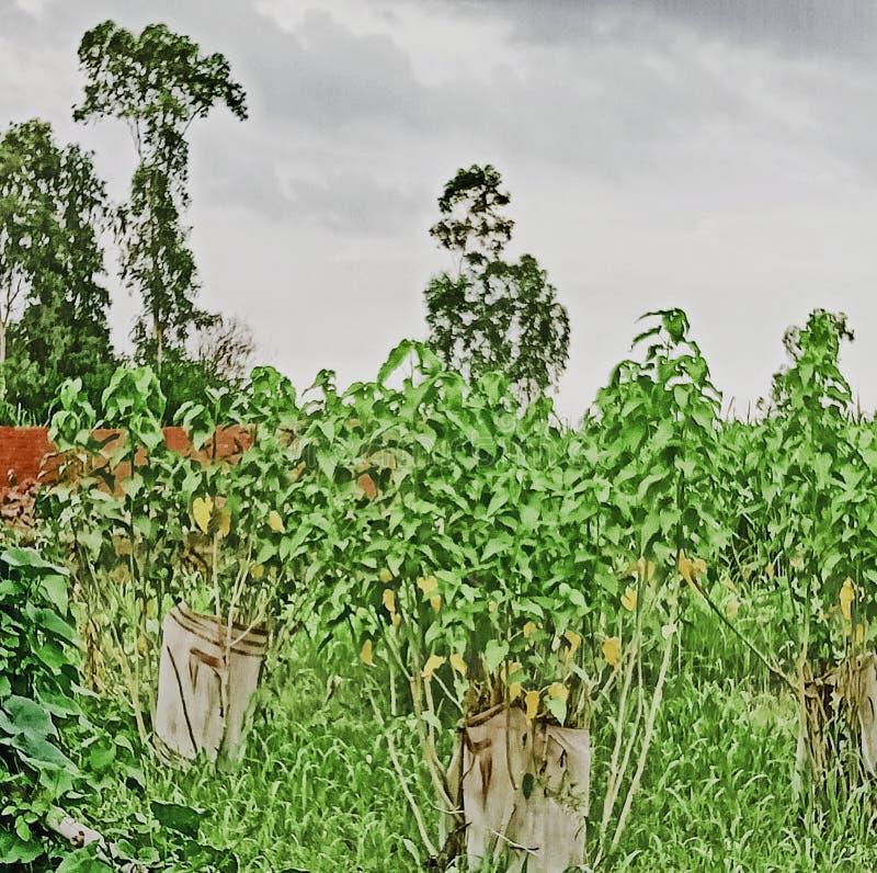 Cloud sky plants gras tree nature. Cloud sky plants gras tree stock images