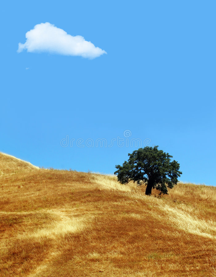 Cloud and tree royalty free stock photos