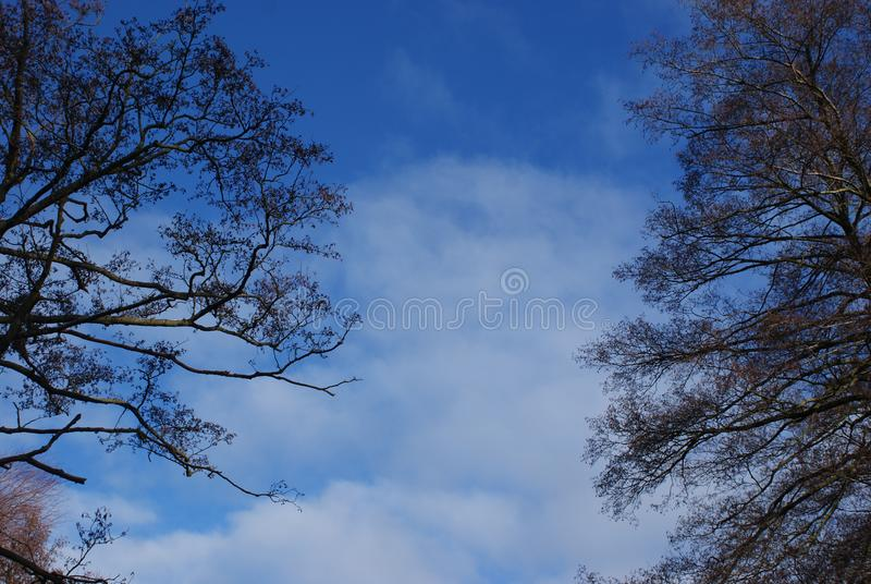 Cloud and Trees on the Blue sky royalty free stock image