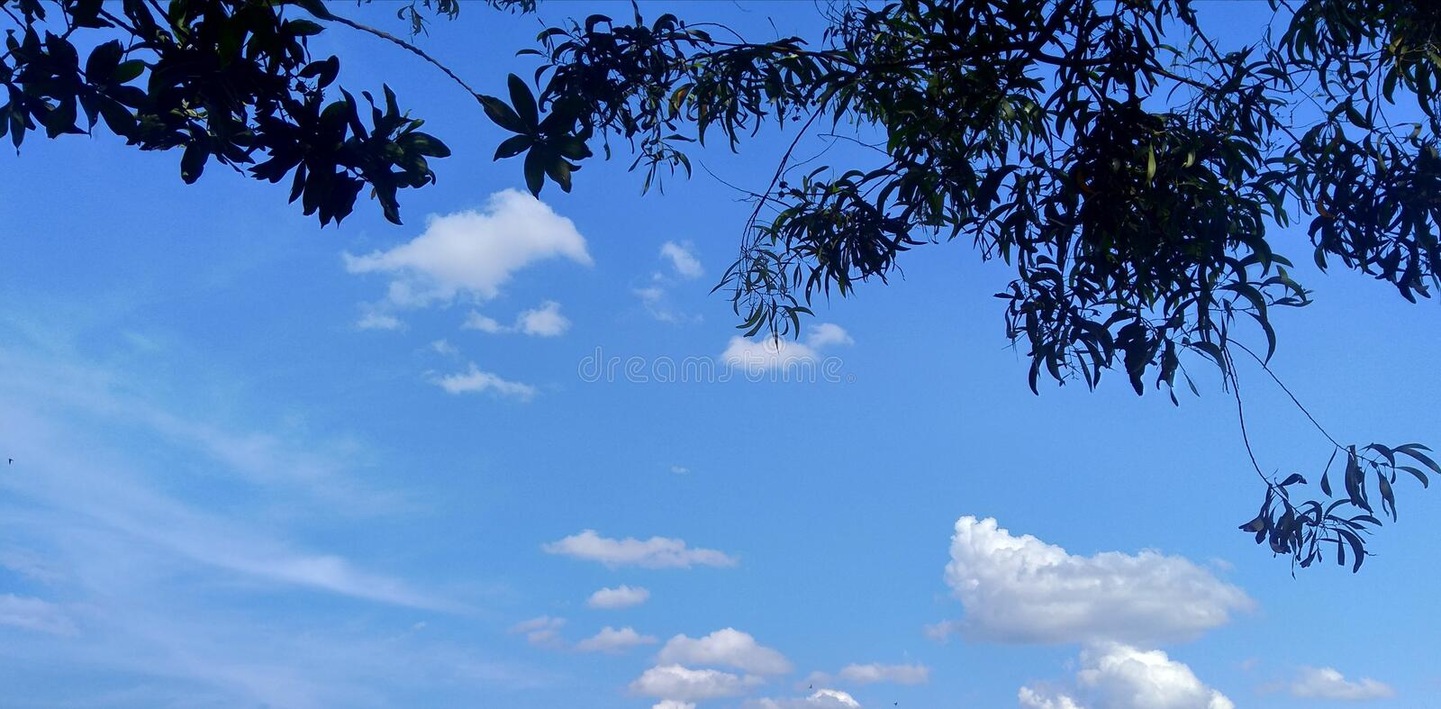 Cloud in the tress. Wonderful indonesia royalty free stock images