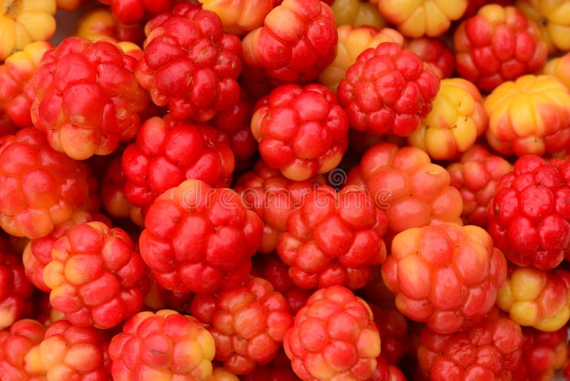 Cloudberry berry fruit healthy food from the forest swamp stock images