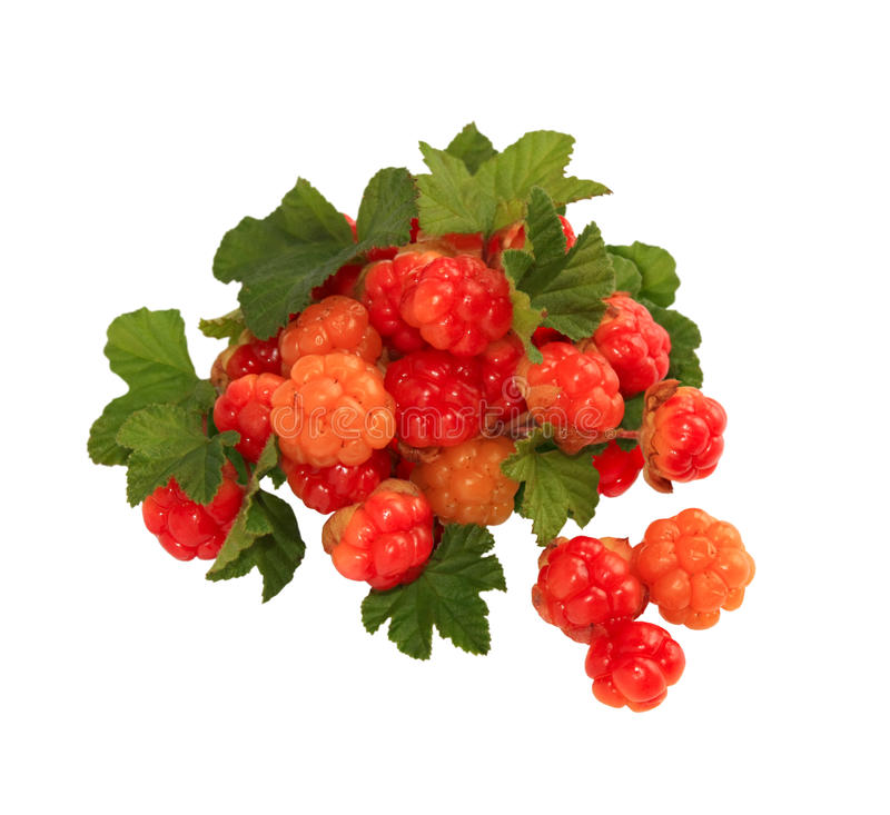 Cloudberry Royalty Free Stock Image