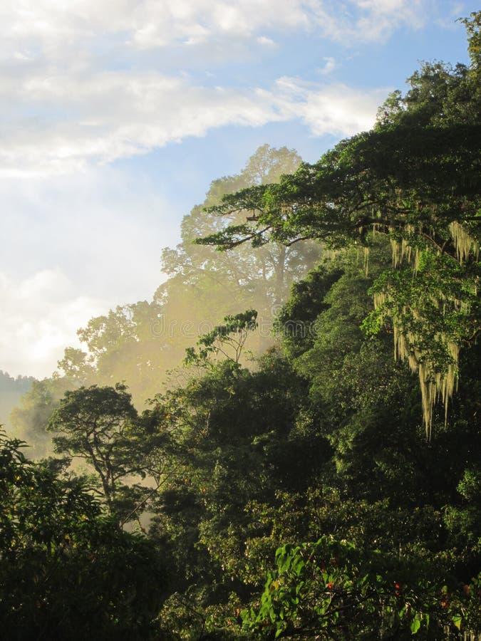Cloudforest na última luz do dia fotografia de stock