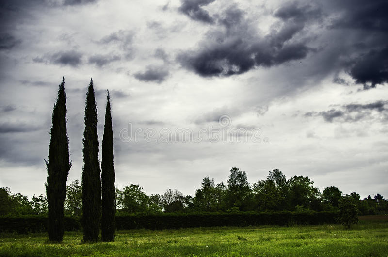 Cloudly Day. Three trees in a cloudly day stock photos