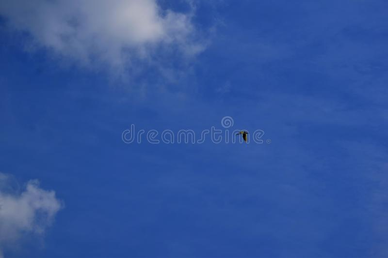 Clouds in the blue sky. bsingle flying bird. alone. airlinei. airplane stock photos