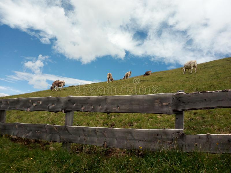 Clouds and cows royalty free stock photography
