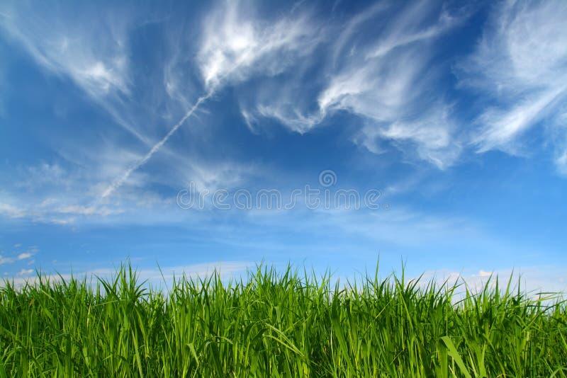 clouds den fleecy gräsgreenskyen under arkivbilder