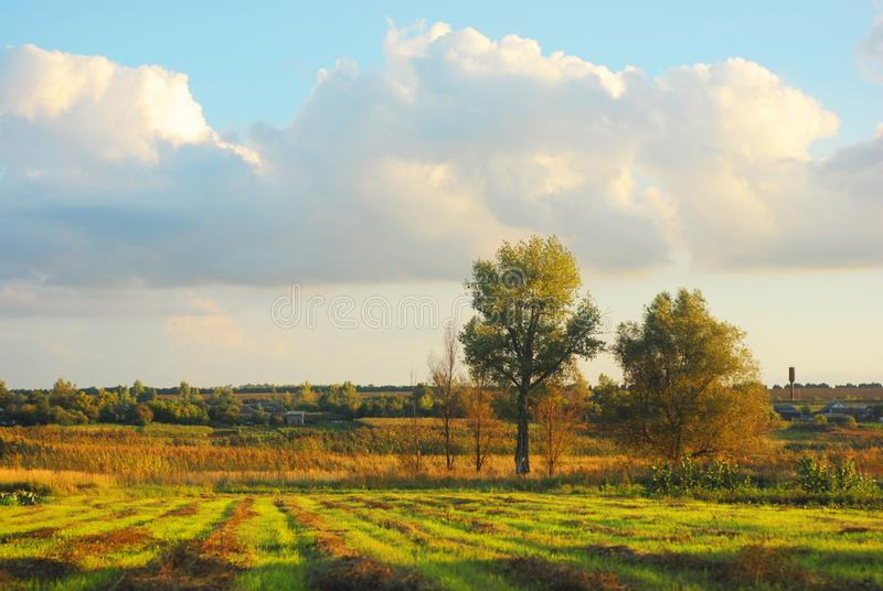Clouds in the evening sunny sky over the meadow with beveled hay in lines, poplars and countryside. Summer in Ukraine royalty free stock images