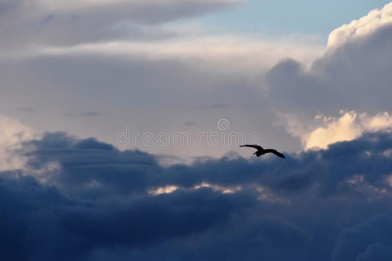 Clouds With The Flying Bird royalty free stock image