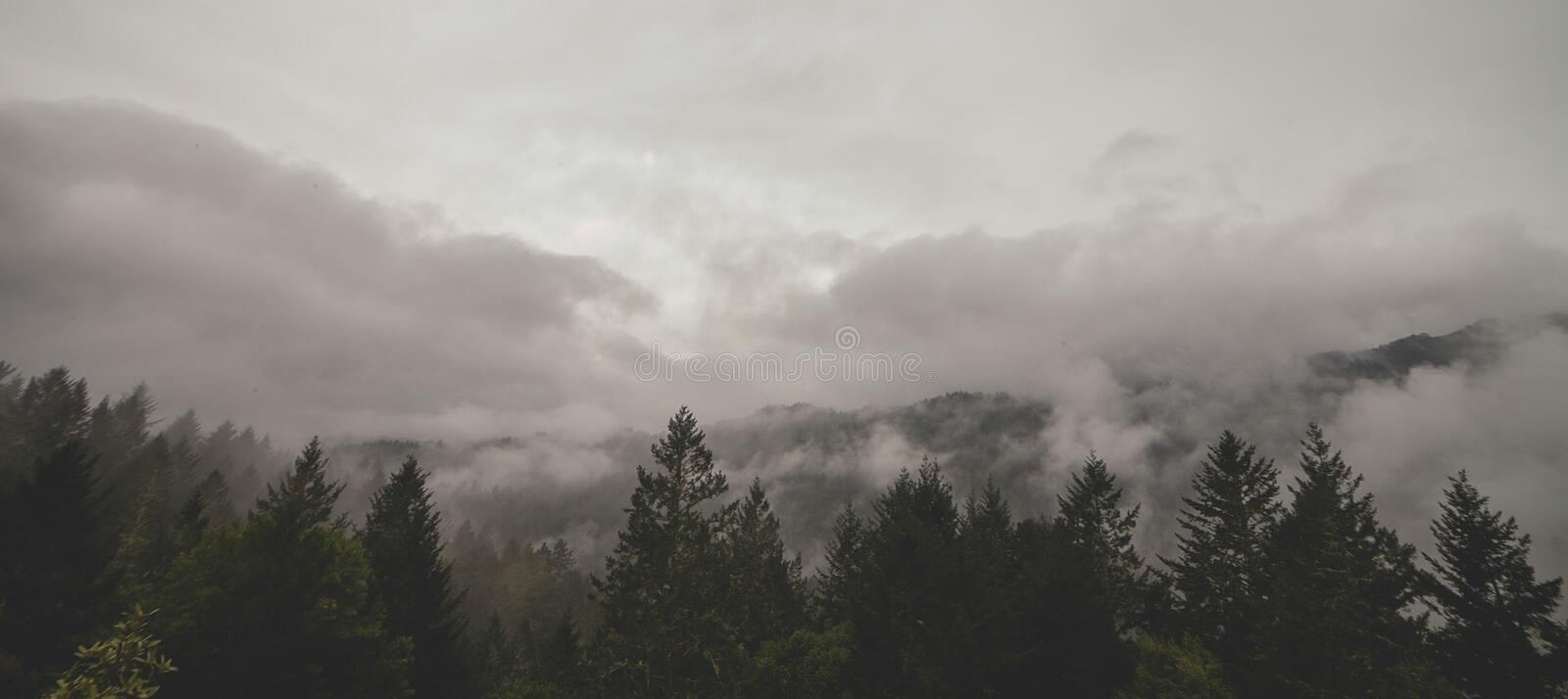 Clouds in forest valley royalty free stock photography