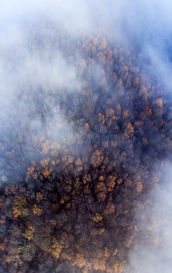 Clouds and mist and smoke from burning trees and fires shrouds a autumn forest in Switzerland. The bare tree tops can be seen poking through the smokey haze stock photo