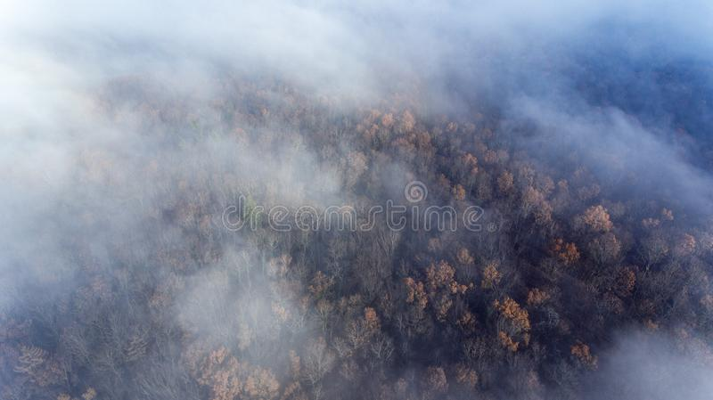 Clouds and mist and smoke from burning trees and fires shrouds a autumn forest in Switzerland. The bare tree tops can be seen poking through the smokey haze royalty free stock images