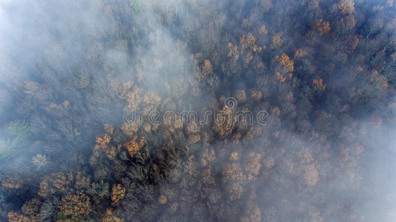 Clouds and mist and smoke from burning trees and fires shrouds a autumn forest in Switzerland. The bare tree tops can be seen poking through the smokey haze royalty free stock photo