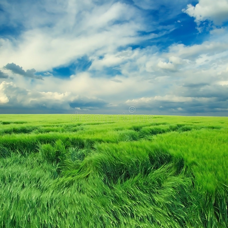 Clouds over the endless field stock photography