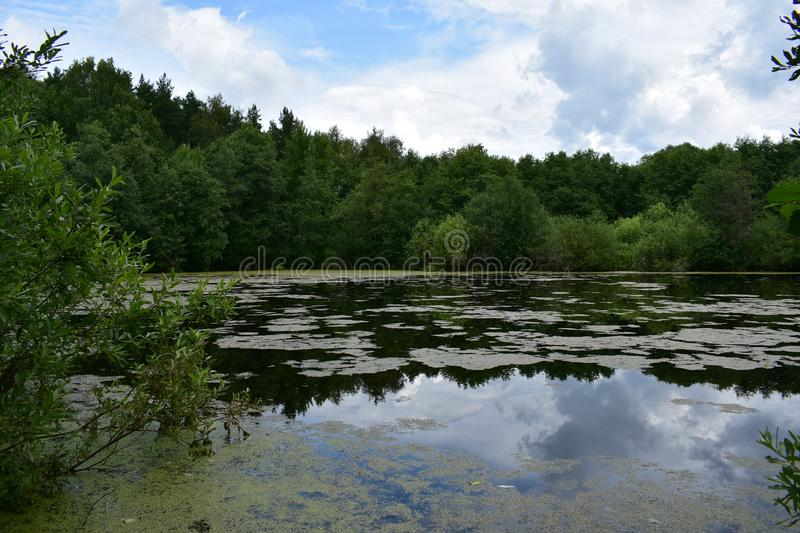 Clouds over the forest pond lake reflected in the water, low bowed branches of trees. The water surface strewn with small vegetation stock image
