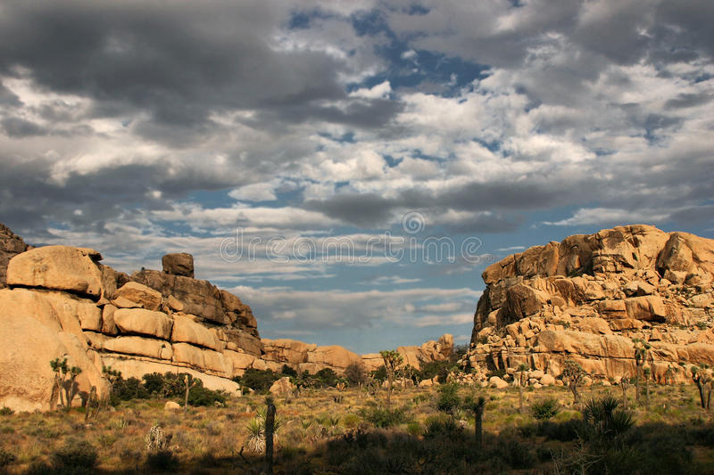Clouds Over Joshua Tree. Later afternoon scenic at Joshua Tree National Park royalty free stock photography