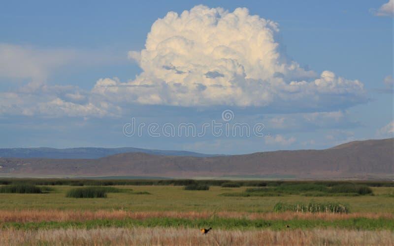 Clouds Over Lower Klamath National Wildlife Refuge stock photo