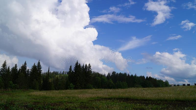 Clouds over spruce forest stock images