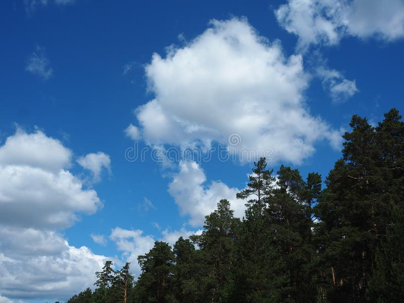 Clouds over the trees. On a sunny day royalty free stock photos
