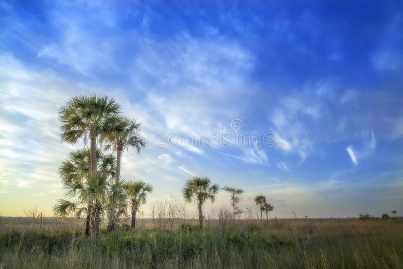 clouds palmträd arkivbilder