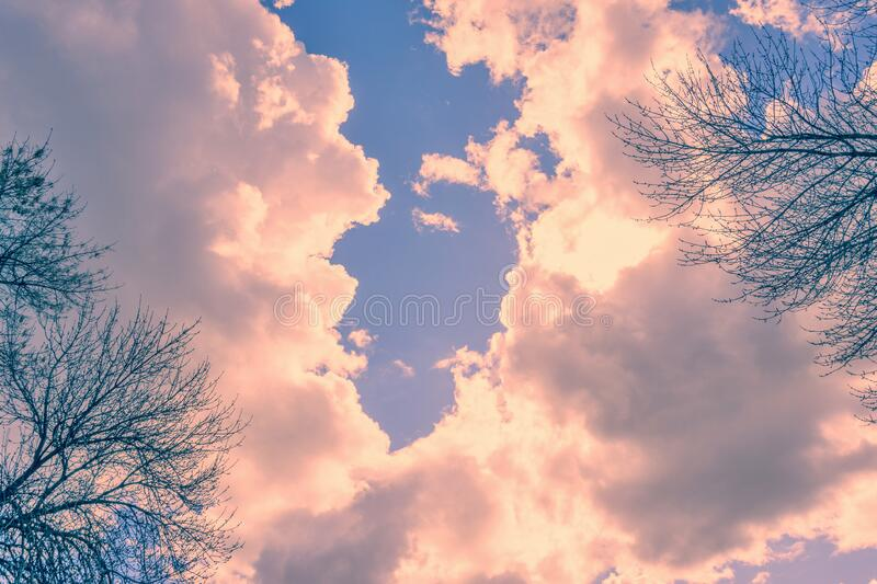 Clouds at sunset. Pink clouds at sunset on a background of tree branches. Nature. Background royalty free stock image