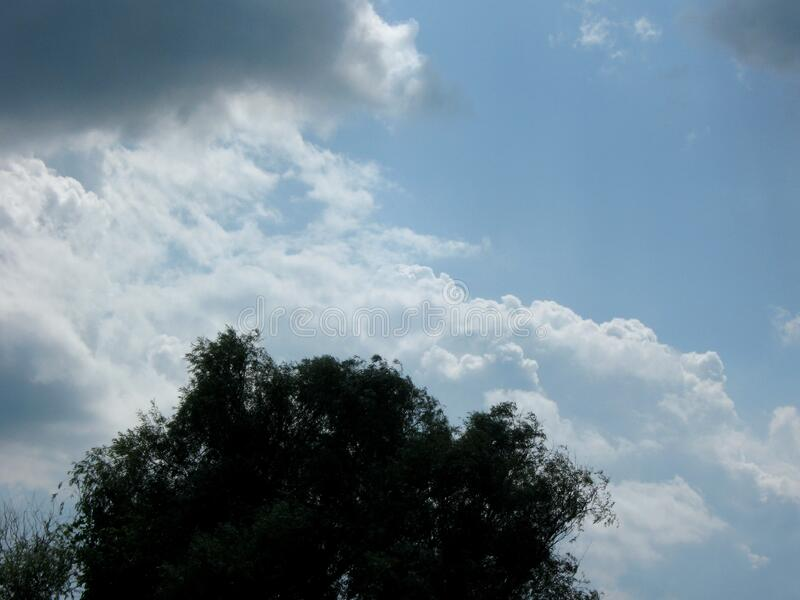 Clouds and tree canopy. During the summer season royalty free stock photos