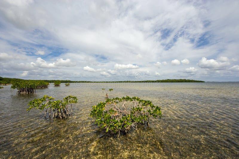 Cloudscape在比斯坎国家公园中,佛罗里达水域relfected  图库摄影
