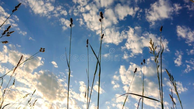 Cloudscape και μακριά χλόη στοκ φωτογραφία με δικαίωμα ελεύθερης χρήσης