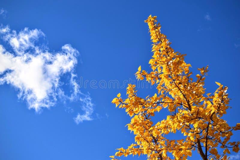 Δέντρο φθινοπώρου και cloudscape στοκ φωτογραφίες με δικαίωμα ελεύθερης χρήσης