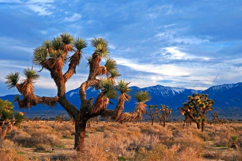 Cloudscape de Joshua Tree en el alto desierto meridional de California cerca de Palmdale y de Lancaster imágenes de archivo libres de regalías