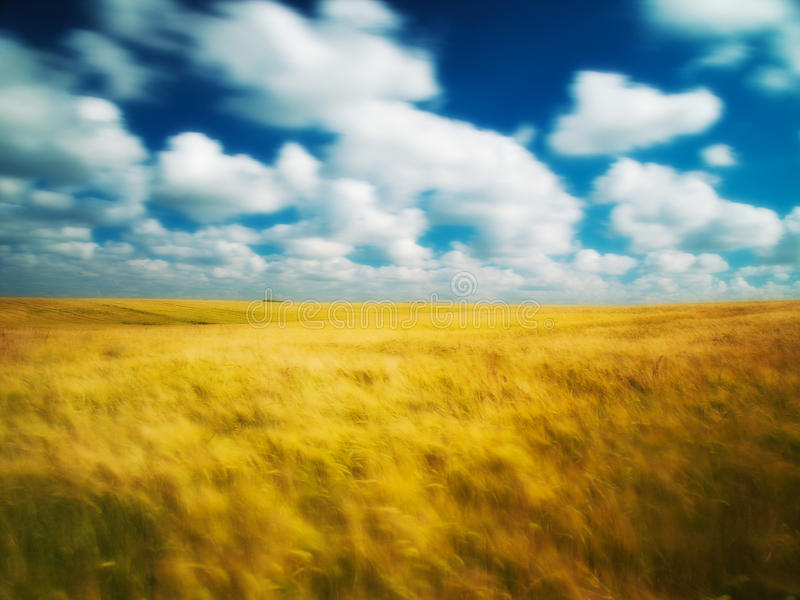 Download Cloudscape Over Corn Field Stock Photo - Image: 16094110