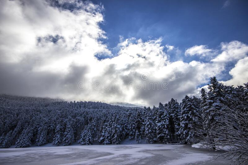 Cloudscape over forest in winter stock photos