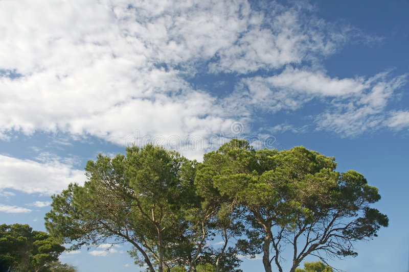 Cloudscape over trees. Cloudscape in blue sky over tree tops royalty free stock photography