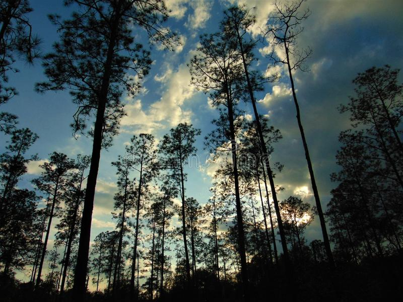 Cloudy afternoon days are the best. I looked up on a cloudy afternoon and I seen a good sky picture. The clouds and pine trees were lined up perfectly stock image
